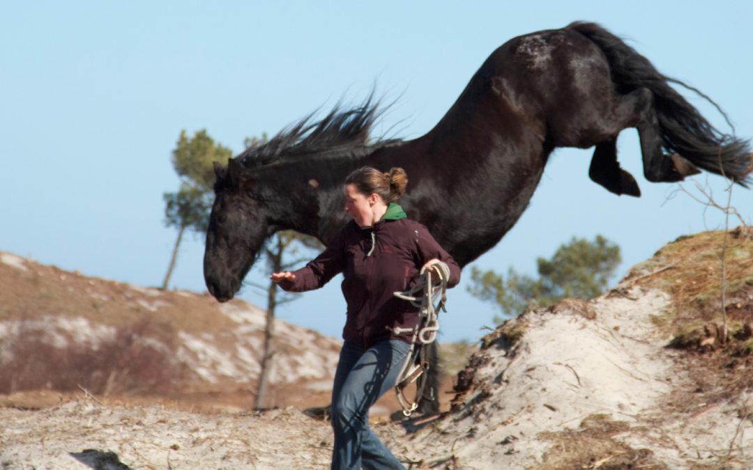 5 communicatie tips van de paarden